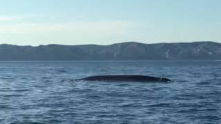 Marseille : une baleine observée au large du Frioul