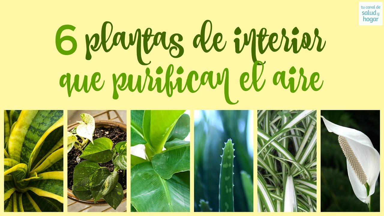 Plantas de interior que purifican el aire youtube - Plantas de interior para salon ...