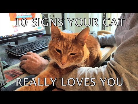 How can you tell if your cat loves u