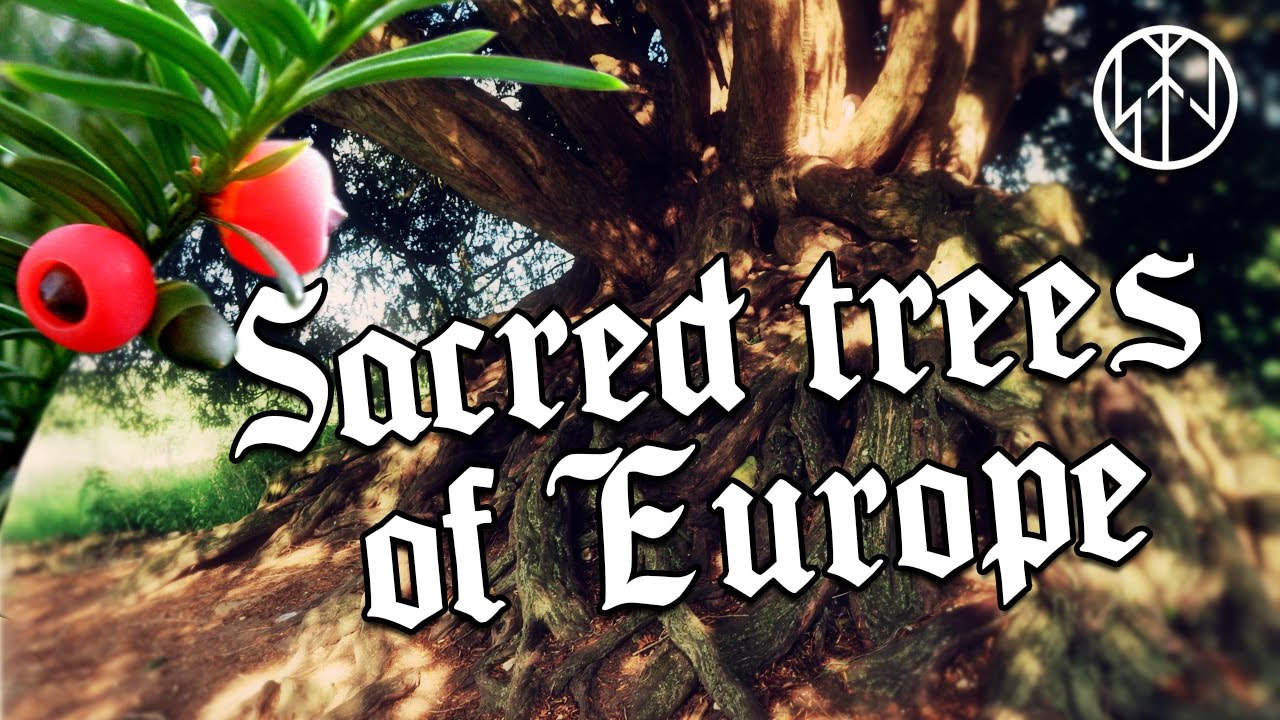 Sacred Trees of Europe - YouTube
