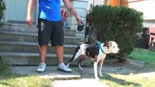 Tim Home Gym Meets Rick The Dog Man