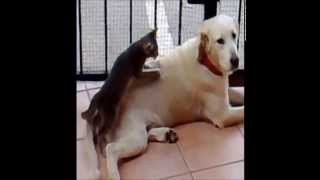 Нежный массаж