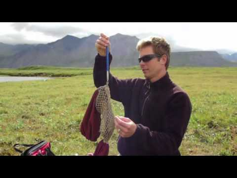 Arctic Ground Squirrels with Michael Sheriff