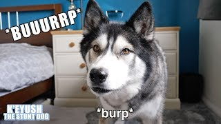 My Dog Burping Snorting and Dreaming Is Hilarious And Cute!