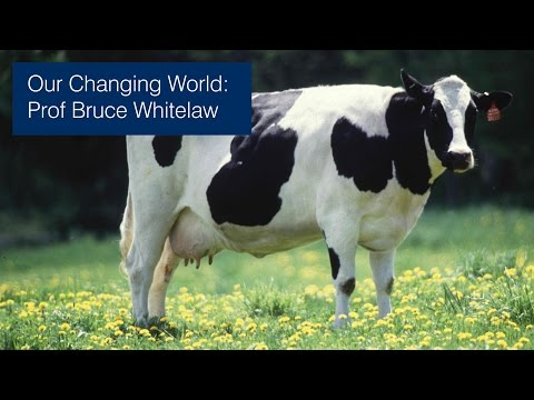 Bruce Whitelaw: Genetically engineering livestock - why?