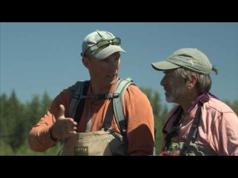 Small Stream Trout Fishing With Tom Rosenbauer