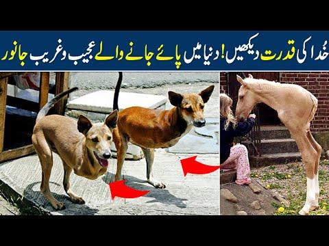 Top 5 Most Unique Animals You Won t Believe Exist In Urdu