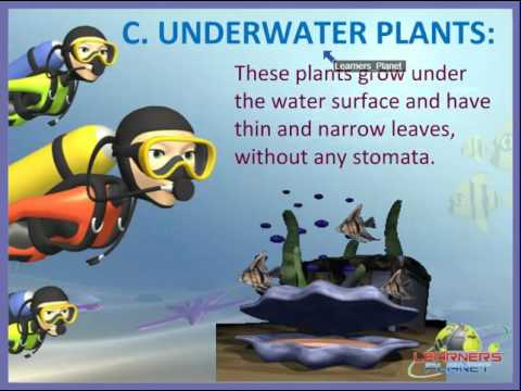 CBSE Class 4 Science Adaptations How Plants Survive session 3