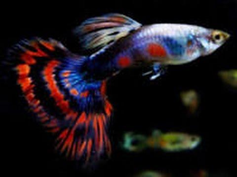 Viral Cara Menanam Rumput Di Aquarium, Viral!