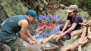 Cách bắt cá cổ xưa - Bắt cá suối bằng nhựa cây rừng