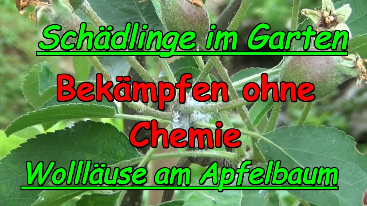 woll use behandeln ohne chemie sch dlinge im garten duo apfelbaum im k bel youtube. Black Bedroom Furniture Sets. Home Design Ideas