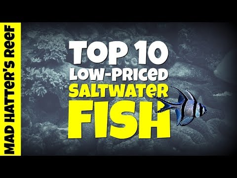 Top 10 Low Priced Saltwater Fish