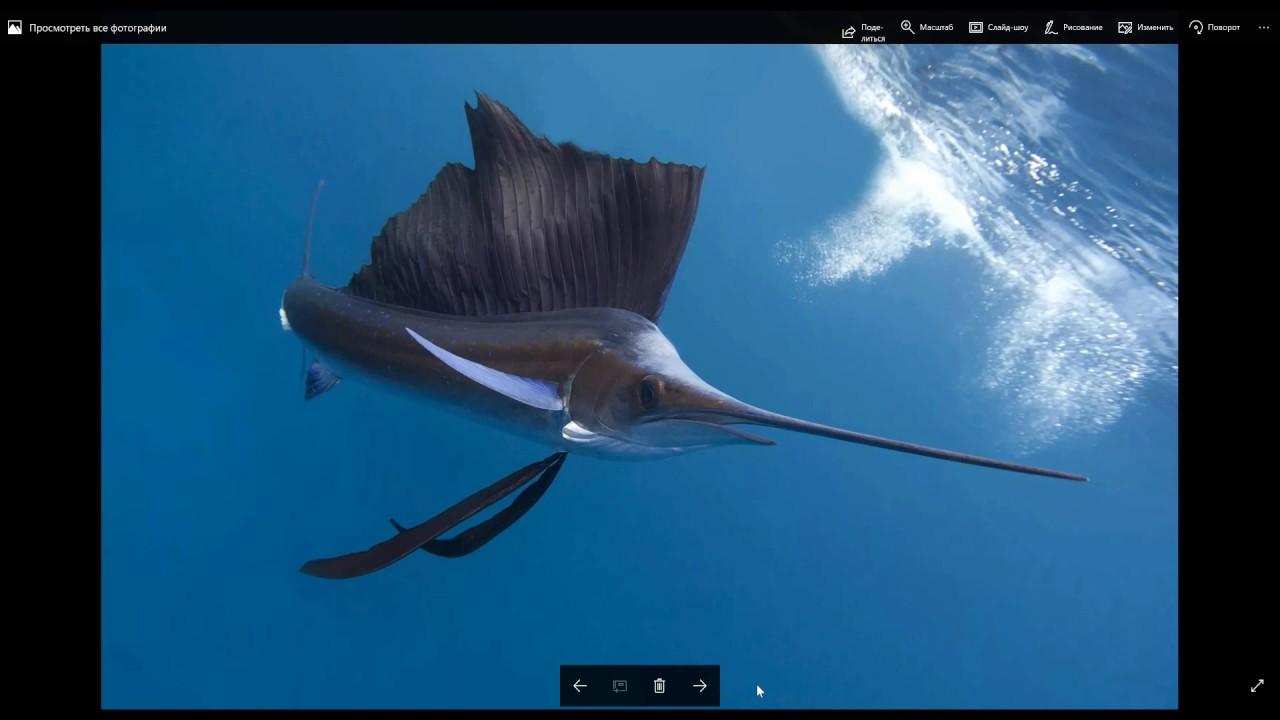 Рыба меч и рыба парусник самые быстрые рыбы мирового океана.