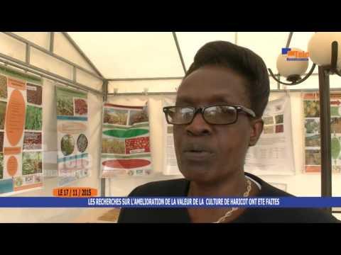 Burundi : Vers la valorisation de la culture du haricot