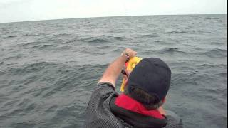 Copper line trolling for lake huron salmon and rainbow