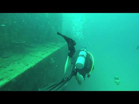 Unbelievable what scuba divers found living in this wreck!!