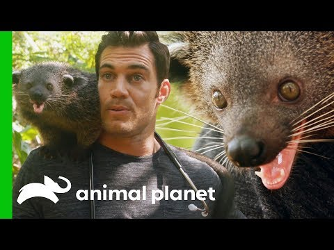 Dr. Evan Antin Bonds with an Incredibly Friendly Palawan Bearcat | Evan Goes Wild