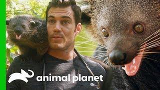Dr. Evan Antin Bonds with an Incredibly Friendly Palawan Bearcat | Evan Goes Wild