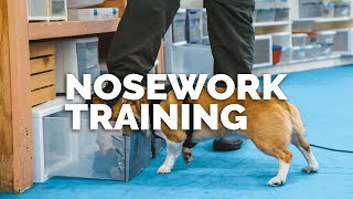 Nosework Training With Andrew Ramsey: First Look