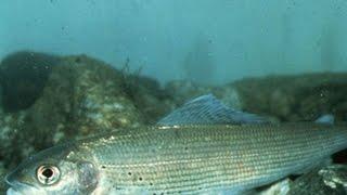 Рыбалка пермь шемети