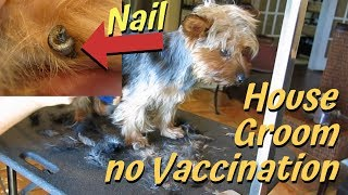 I helped groom a dog at home with no vaccinations