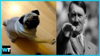 Should Count Dankula Go To Jail For NAZI DOG Video?! | What's Trending Now!