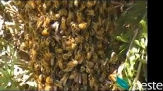 Pest Control Sydney - Bees