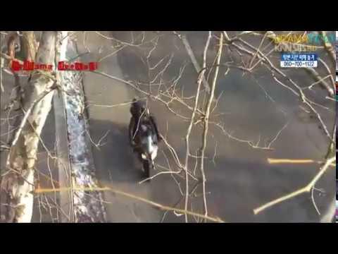 Chal Wahan Jaate Hain II 49 Days MV II A Love Story Starting From Death Fan made II Korean Drama Mix