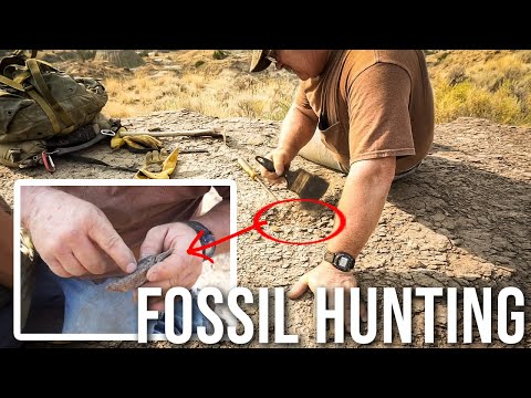 Fossil Hunting Dinosaurs In The Badlands