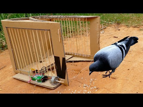 Bird Trap Technology  Trap bird machine part 1