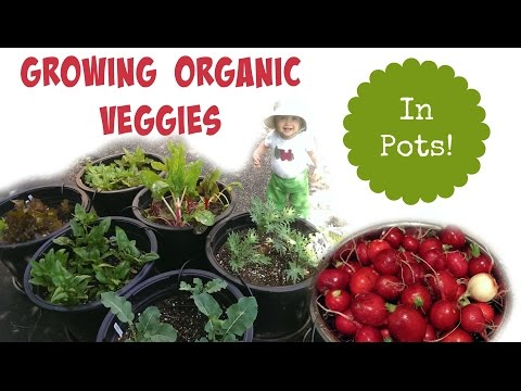 "Organic ""Pot Garden"" 