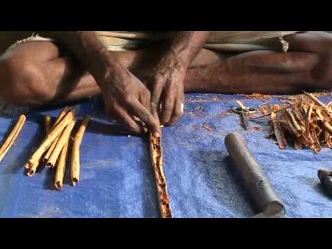 La prodution de cannelle au Sri Lanka : une vidéo www.planete-responsable.com