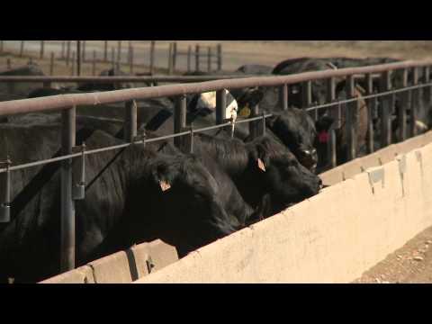 Farm Program Updates - Dan Steinkruger - August 15, 2014