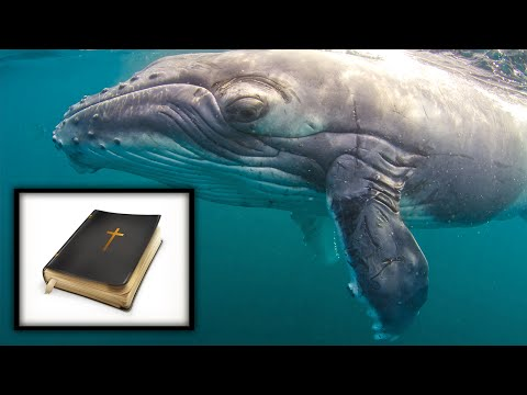 Bible Story About Man Living In Whale Is True, Says Fox 'Historian'