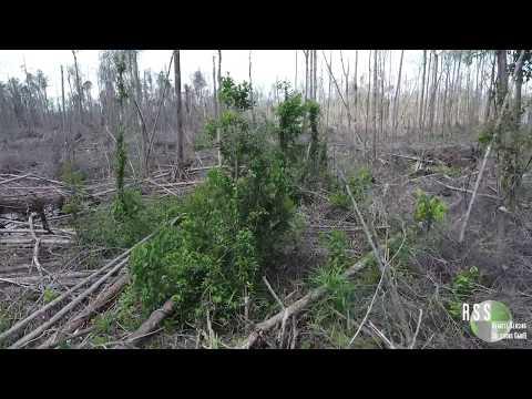 Drone Flies Through Forest Degradation in Kalimantan, Indonesia after El Niño