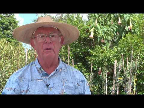 Сорта сливы – ТОП-7 лучших сортов сливы, список с названиями