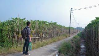 SVM Mì Tôm - VẦNG TRĂNG TRONG CON - Thanh Tùng ft Guitarist Thạo Acoustic