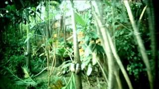 Видео - отзыв об отеле Golden Sand Inn 2* Таиланд от