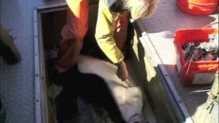 Repeat youtube video Pêche au flétan