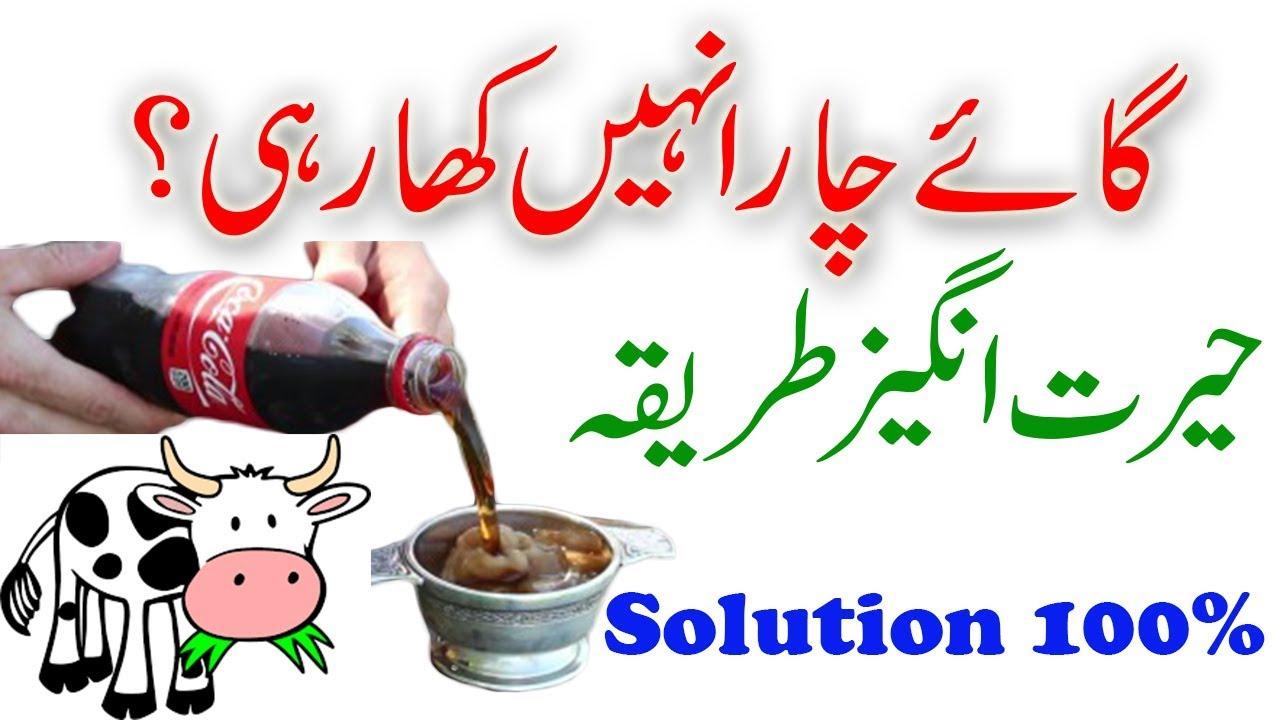 cow chara nahi kha rahi mnadi 2017 100 solution cow