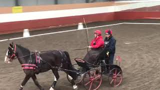 Fountain Indoor Carriage Driving Dressage, (Spectators View)