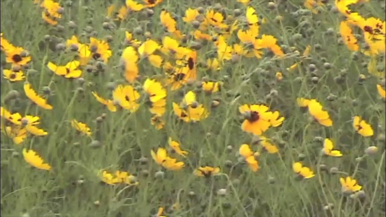 009 Paradise Garden The Texas Hill Country Landscape Spring