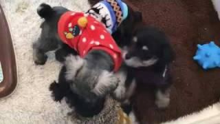 問い合わせ先 犬ごころ 東川口店 048-290-1711 犬ごころHP→http://www.i...