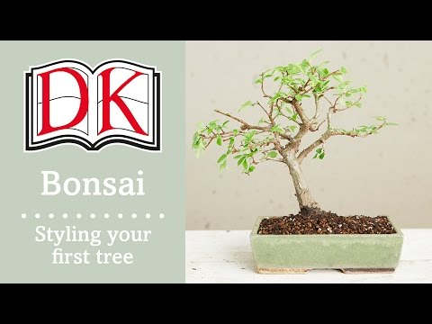 Bonsai: Styling Your First Bonsai Tree