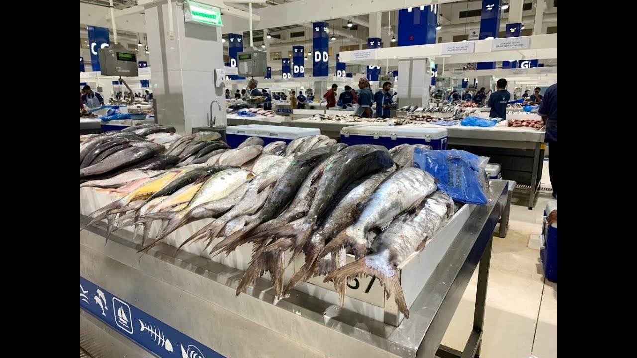 New Dubai Fish Market   Deira Waterfront Fish Market UAE   Massive & Clean  Market