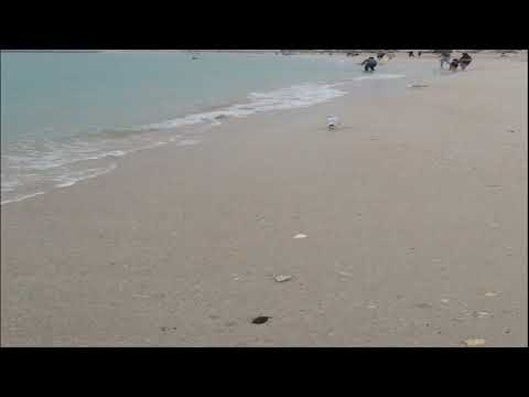 Latest Jumeirah Beach | Dubai UAE 2019 | No Where Like Jumeirah | Beautiful Peaceful Beach