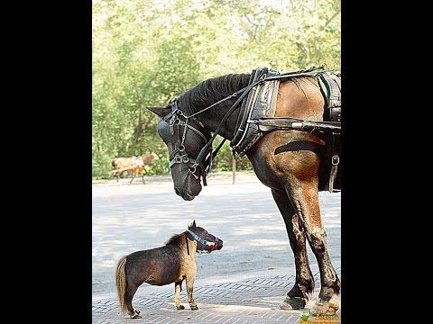 Faze tari cu cai