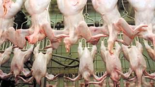 Учёные умоляют не есть курятину! Вот что она творит с организмом(Учёные умоляют не есть курятину! Вот что она творит с организмом Центр по контролю и профилактике заболеван..., 2014-08-17T20:27:24.000Z)