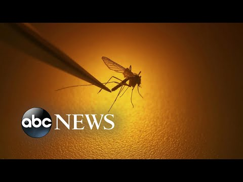 New Warning About Rare Mosquito-borne Illness That Has Killed 1 L ABC News