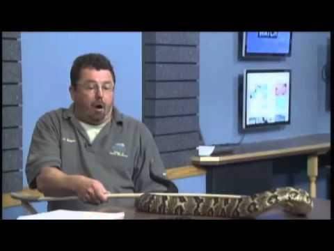 Venomous Snake Endangered In Ohio
